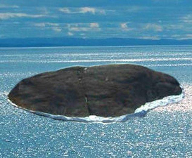 4. Kanada ve Danimarka'nın arasında paylaşamadığı Hans Adası oldukça ilginç bir çekişmeye ev sahipliği yapıyor.