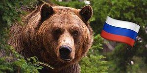 Тест: Только 1 житель России из 100 знает русскую природу на 11/11