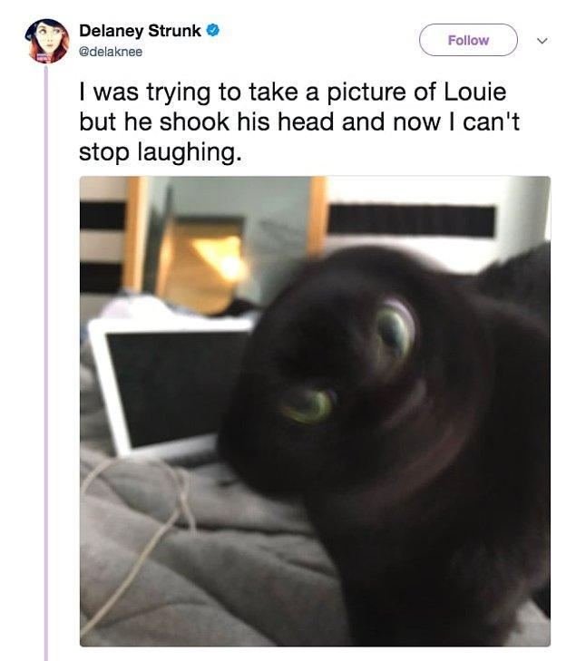 22. Louie'nin fotoğrafını çekmeye çalışıyordum ama kafasını öyle bir salladı ki, gülme krizine girdim şu an!