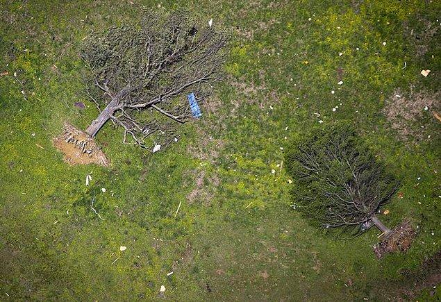5. Arkansas'daki kasırganın köklediği ağaçlar.