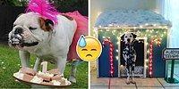 «Чтоб я так жил!»: Этим вкрай избалованным собакам остается только завидовать