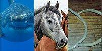 Топ-25 самых смертоносных животных на планете