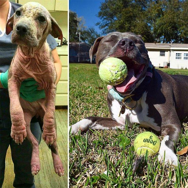 5. 2 yıl önce parkta ölüme terk edilmiş bir köpek ve bugünkü hali...
