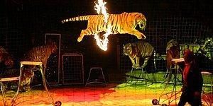 Страшное искусство: Самые ужасные трагедии в истории цирка