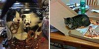 18 фото с типичным поведением кошек, которые рассмешат вас и взбесят одновременно