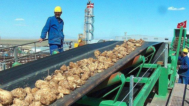 """""""Şeker fabrikalarının kapatılması kısırlaştırma projesinin bir parçası"""""""