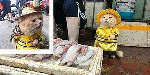 Самый классный торговец рыбой: Вьетнамский котик, которого обожают все покупатели! 🐱