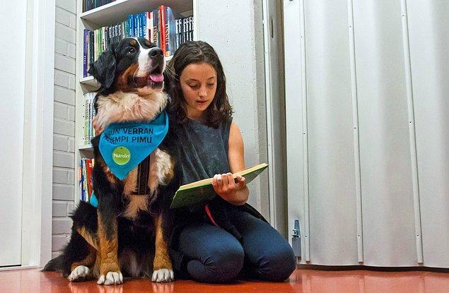 15. Finlandiya'daki kütüphanelerde çocuklara okuma sevgisi aşılamak amacıyla eğitilmiş köpekler bulunuyor.
