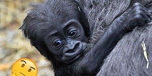Спорим, вы не сможете угадать на 9/9 правильные названия детенышей животных?