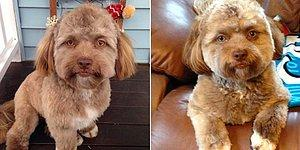 Бровки, глазки, губки... Йоги - собачка с человеческим лицом!