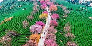 Весна в Китае: 15 фотографий цветущей сакуры, которая поразит ваше воображение