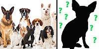 Тест: только человек, который души в собаках не чает, сможет отгадать все эти породы по силуэту