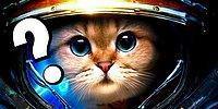 Пройдите этот тест и узнайте, как вам назвать своего кошачьего питомца