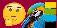 Тест: угадайте животное по основным цветам его окраса