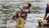Самый добрый ролик на Земле: люди спасают животных, оказавшихся в беде