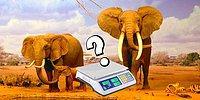 Тест: Только 1 из 8 человек сможет определить самых тяжелых животных на планете по их весу!