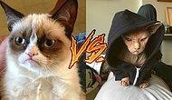 Забудьте «Сердитого кота», теперь сфинкс Локи – самый угрюмый кот планеты!