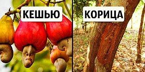 12 поразительных фото, которые докажут, что вы понятия не имеете, как выращивают еду