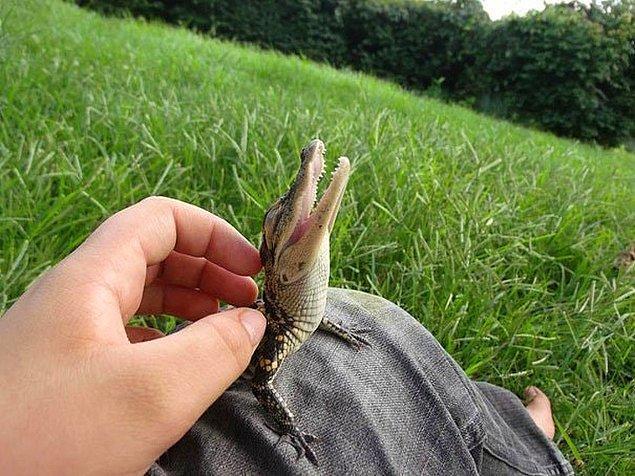 4. Güzel havanın keyfini çıkaran küçük bir timsah!