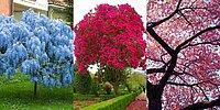 Тест: выберите дерево, а мы расскажем, что вас ждет в любви