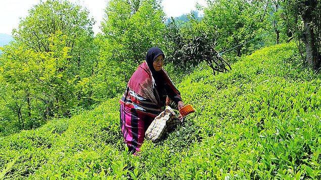 'Fındık, bal ve çay üzerine yatırım yapmak istiyorlar'