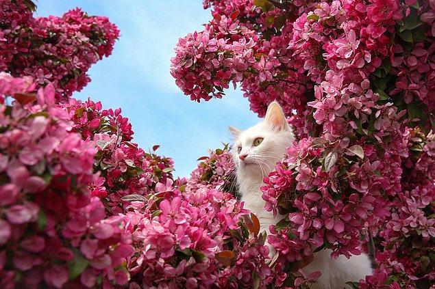 Türü koruma amacıyla kurulan merkez, 240 Van kedisine ev sahipliği yapıyor.