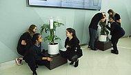 В одной из школ в Объединённых Арабских Эмиратов Компания IKEA провела необычный эксперимент с двумя растениями: одно из них хвалили, другое ругали