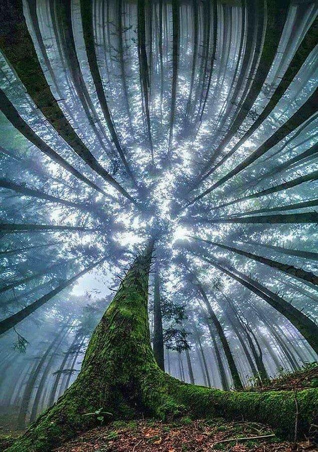 17. Ormanın derinliklerinde... Hem de dikey yönde!