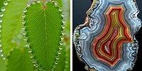 20 потрясающих фотографий, над созданием которых поработала сама природа
