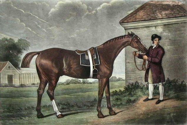 3. Safkan yarış atlarının yaklaşık %95'inin soyu tek bir ata kadar takip edilebilir. 1764'te bir tutulma sırasında doğduğu için adı Eclipse (Tutulma) olan bu at o kadar başarılıymış ki, insanlar diğer atların üzerine bahis oynamadığı için emekli olmuş.