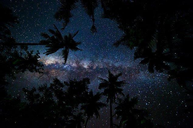 20. Samanyolu'ndaki yıldız sayısı Dünya'daki ağaç sayısından azdır.