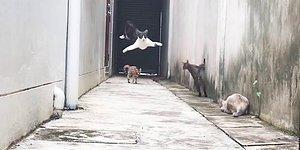 Кошачий паркур, от которого невозможно оторвать глаз!