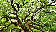 Тест: Каким деревом ты станешь после смерти?