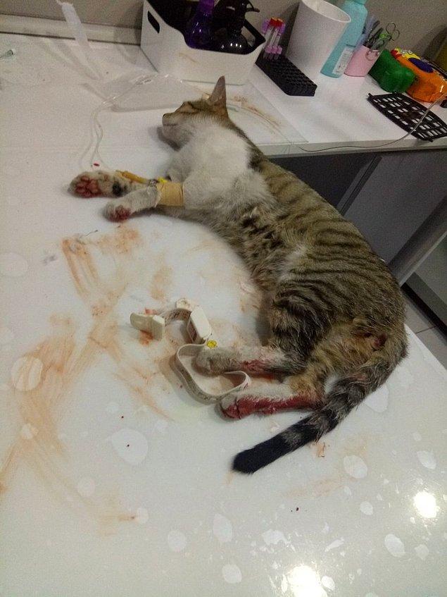 Öte yandan olayın araştırılmasını isteyen öğrenciler, polis ekiplerinin 'kedileri gömün' cevabını verdiklerini iddia etti.