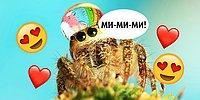 Пауки тоже бывают «ми-ми-ми»: 18+ фото, которые мигом вылечат вашу арахнофобию