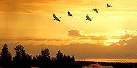 Знаете ли вы какие птицы присутствуют на гербах различных стран?