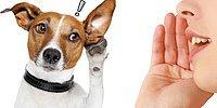 Доказано наукой: собаки понимают, что вы им говорите, независимо от интонации!