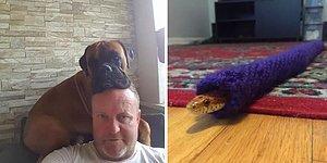 Фотографии, доказывающие, что люди могут любить животных до беспамятства