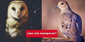 Тест: Вы сова или жаворонок?