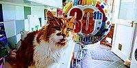 Хозяйка этого кота, взявшая его в 1988 году, не думала, что будет справлять День рождения питомца через 30 лет!!!
