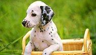 Тест на знание популярных пород собак