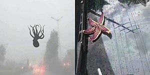 Китай накрыл шторм, в результате которого выпали осадки в виде морских существ