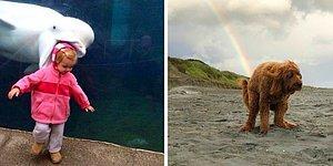 Фотошедевры, на которые нужно смотреть дважды из-за веселого заднего фона