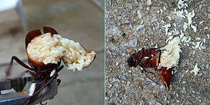 Фотографии, которые заставят вас взглянуть на природу иначе!