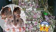 В Индии мыши съели 1.200.000 рупий (около 1 млн рублей) прямо внутри банкомата