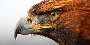 Тест: А ваше зрение, как у орла?