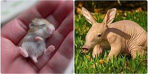Детеныши животных, которых редко кто видит такими малютками
