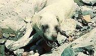 Köpeklere Yönelik İki Vahşet Daha: Diyarbakır'da Yakarak Öldürdüler, Hakkari'de Gözlerini Oydular