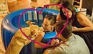Такое большое «собачье сердце»: Собака поддерживает свою хозяйку во время родов, словно человек!
