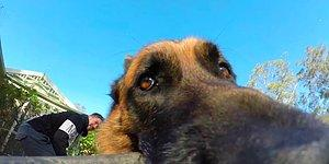 Собака решила поиграть с хозяином, держа палку GoPro в зубах